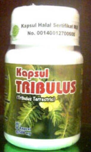 tribulus kapsul